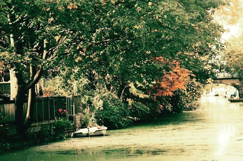 Tree Growth Water Branch Green Color Waterfront Lush Foliage Day Nature Tranquility Canal Outdoors Solitude Tranquil Scene No People Town