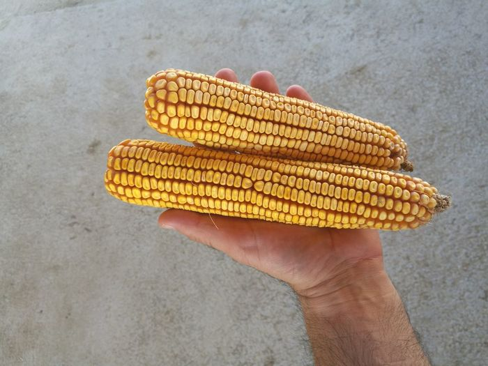Cropped Image Of Man Hand Holding Corns
