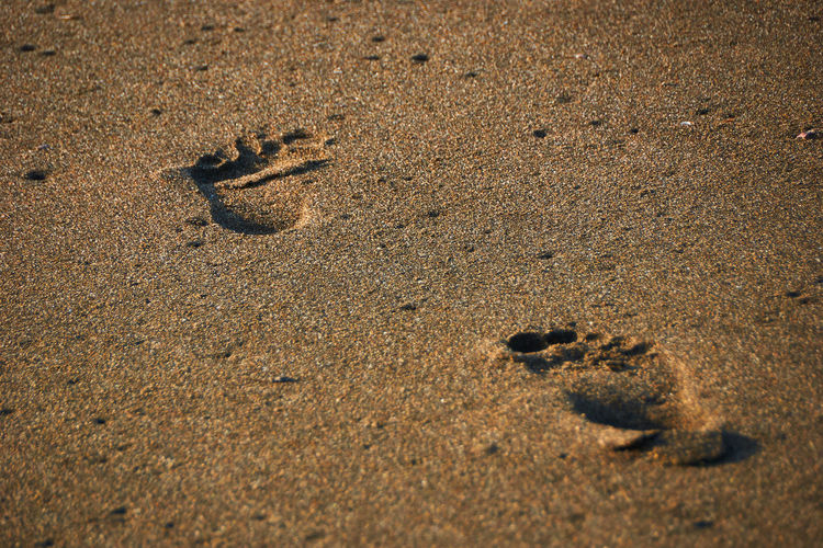 Footprint... Sand Land Beach No People FootPrint Nature Animal Day Animal Themes High Angle View Brown One Animal Close-up Print Full Frame Selective Focus Animal Track Sunlight Pattern Animal Wildlife Surface Level Footpath FootPrint Scenics Beachphotography