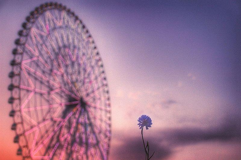 あなたに花を( ˇ͈ᵕˇ͈ )想い出の観覧車に添えて…♡ あなたを想う あなたと見隊 あなたがいるソラ 想い出 観覧車 葛西臨海公園 ソラ 空を見上げる Sky