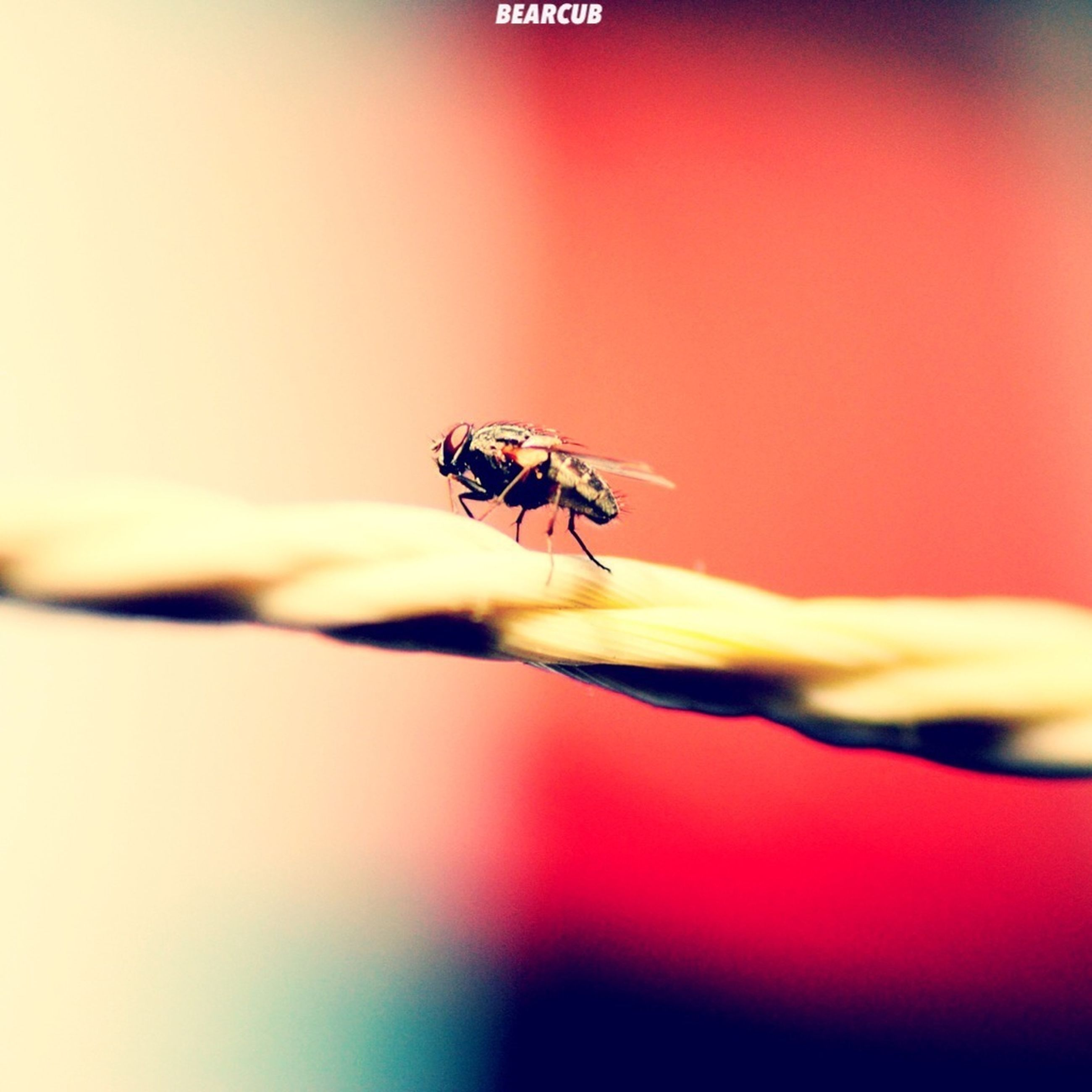 animal themes, insect, one animal, animals in the wild, wildlife, close-up, selective focus, focus on foreground, spider, indoors, nature, red, full length, arthropod, wall - building feature, no people, stem, copy space, orange color, zoology