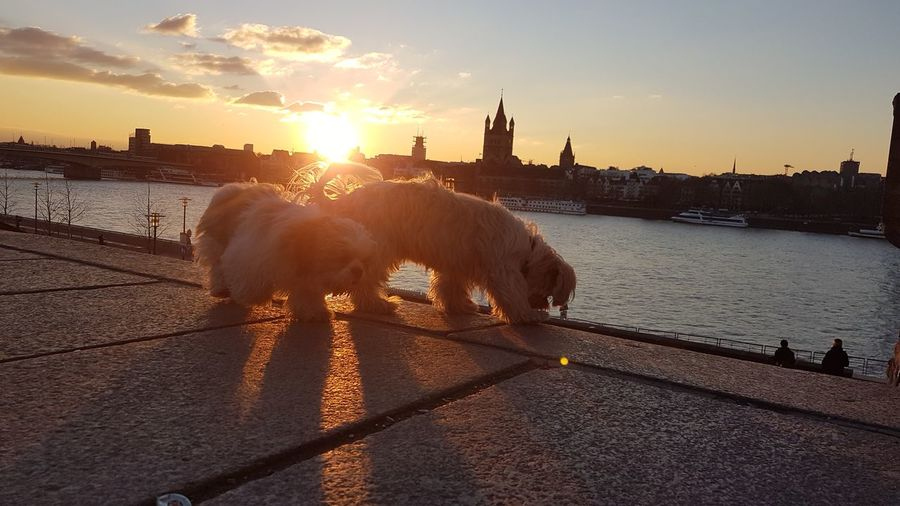 View of horse in city at sunset