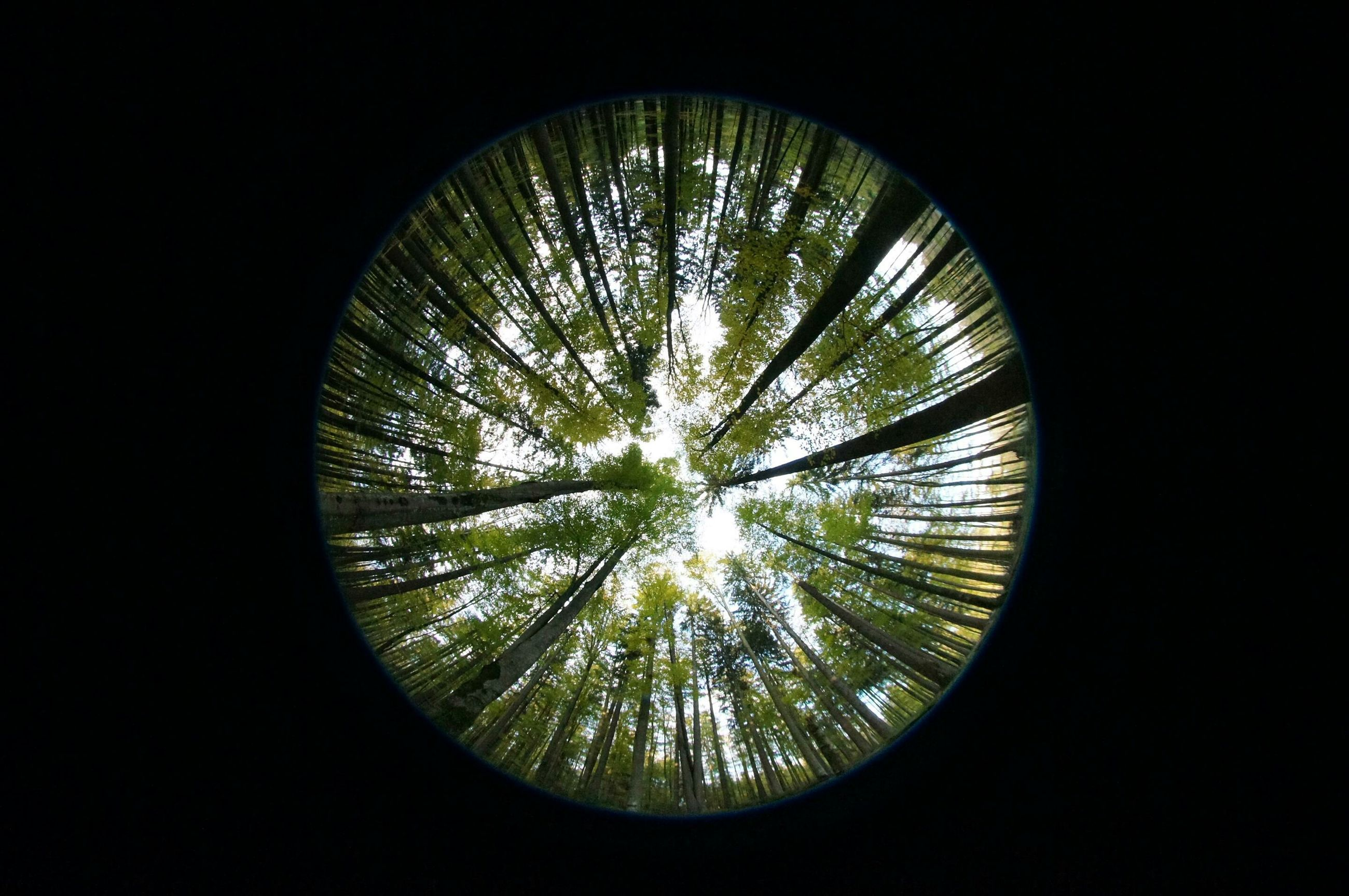 circle, indoors, low angle view, geometric shape, tree, directly below, dark, glass - material, pattern, shape, window, no people, silhouette, sky, round, design, built structure, skylight, glowing, illuminated