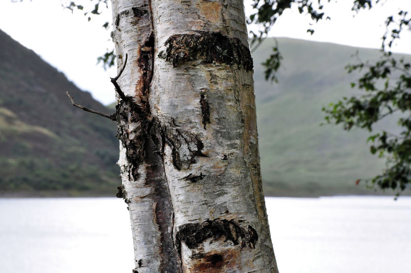 Close-up of tree trunk by lake against sky