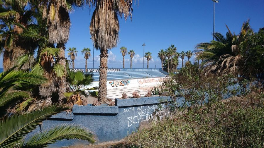 Abandoned pool. Puerto De La Cruz SPAIN España Canary Islands Islas Canarias Pool Swimming Pool Abandoned Ruin Mystery Sun Vacations Holidays Palm Tree Palm Trees Green Urban Nature Civilization Tree Water Palm Tree Beach Clear Sky Sky
