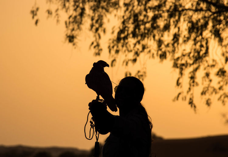 Silhouette falcon perching on woman hand against orange sky