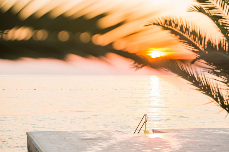 Scenic View Of Sea Seen Through Palm Trees During Sunset