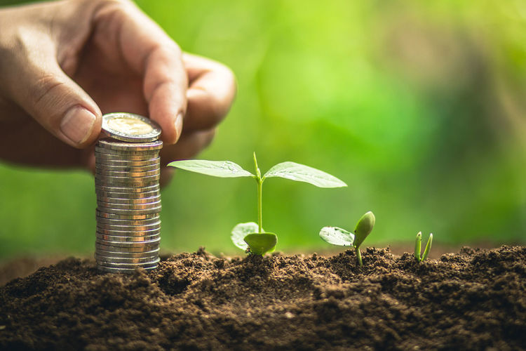 Young tree plant a tree Watering a tree in nature light and background,Growing trees and money Beginnings Close-up Day Fragility Green Color Growth Human Body Part Human Hand Leaf Nature New Life One Person Outdoors People Plant Planting Real People Savings