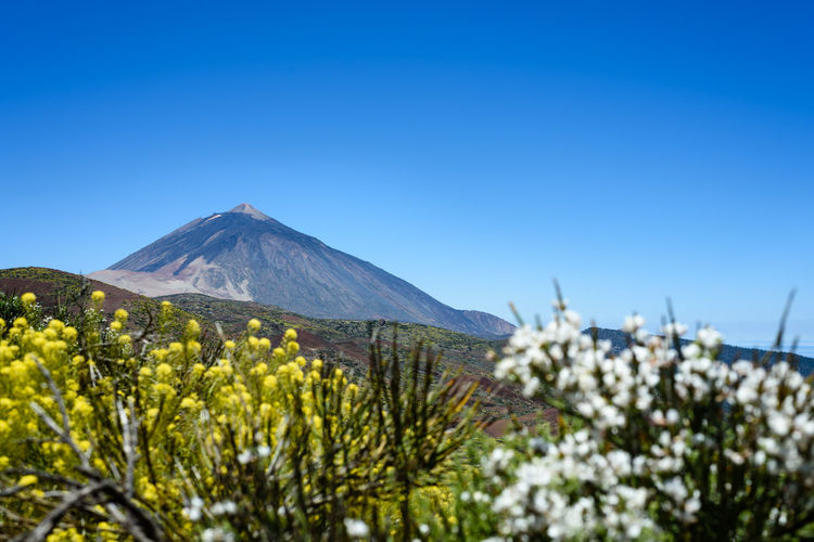 Scenic view of the El Teide volcano on Tenerife island on a sunny day El Teide Travel Travel Photography Traveling Beauty In Nature Blue Copy Space Day Environment First Eyeem Photo Flower Growth Land Landscape Mountain Nature Outdoors Plant Scenics - Nature Sky Tenerife Tranquil Scene Travel Destinations Volcano