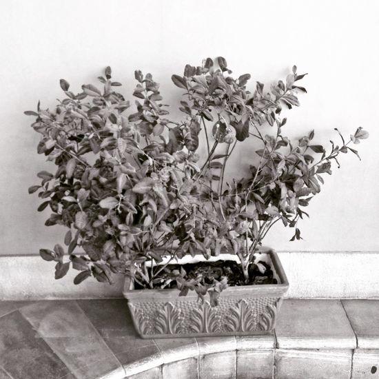 Against a wall. UAE Monochrome Minimalist Photography  Monocromatico Minimalismo Blackandwhite Biancoenero