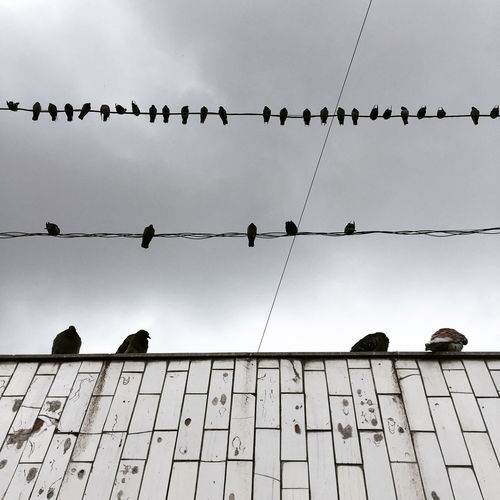 Low angle view of birds on fence against sky