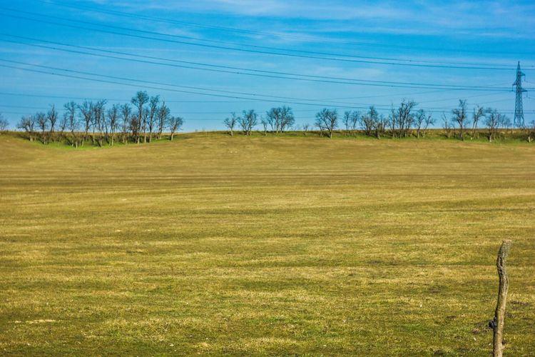 Day Field Grass