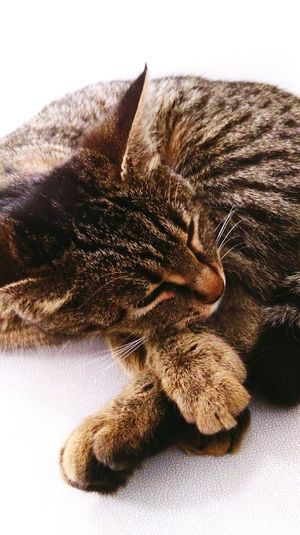 Sleeping Cat Catlovers Cat Love Sleepy Naugty Pawsokulumuzun pis, arsız kedisi 💕😂