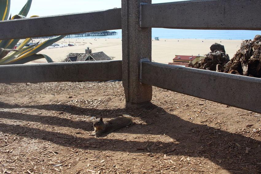 Animal Beach California Outdoors Pacific Ocean Place To Be  Santa Monica, California Shadow Squirrel Sunlight