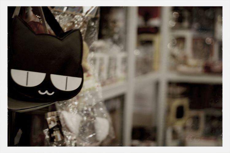 Nipponfest Hangukon Catcontent Going To Market