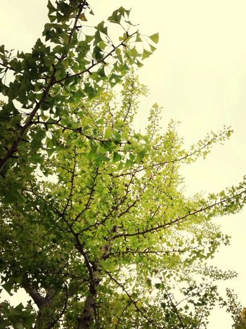 黄葉はまだだなぁ〜来月 来る時には黄色くなってるかな… Hanging Out Photo Autumn Leaves Tree
