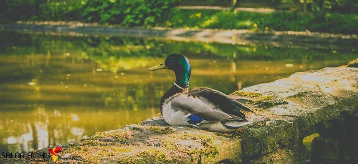 Living like a Duck . Black&green Vintage Garten