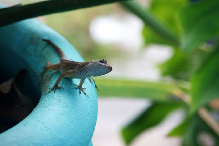 Close-up of a lizard on leaf