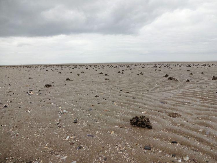 Sand Cloud - Sky Nature Sky Landscape Outdoors Beach Scenics Irland Ireland Seascape Cloudy Day Horizon Over Water Low Tide Sea Beauty In Nature North Sea Weite Weitblick Tide Land Mud Flat Sand Worm Lugworm Wattwurmhäufchen Wattwurm