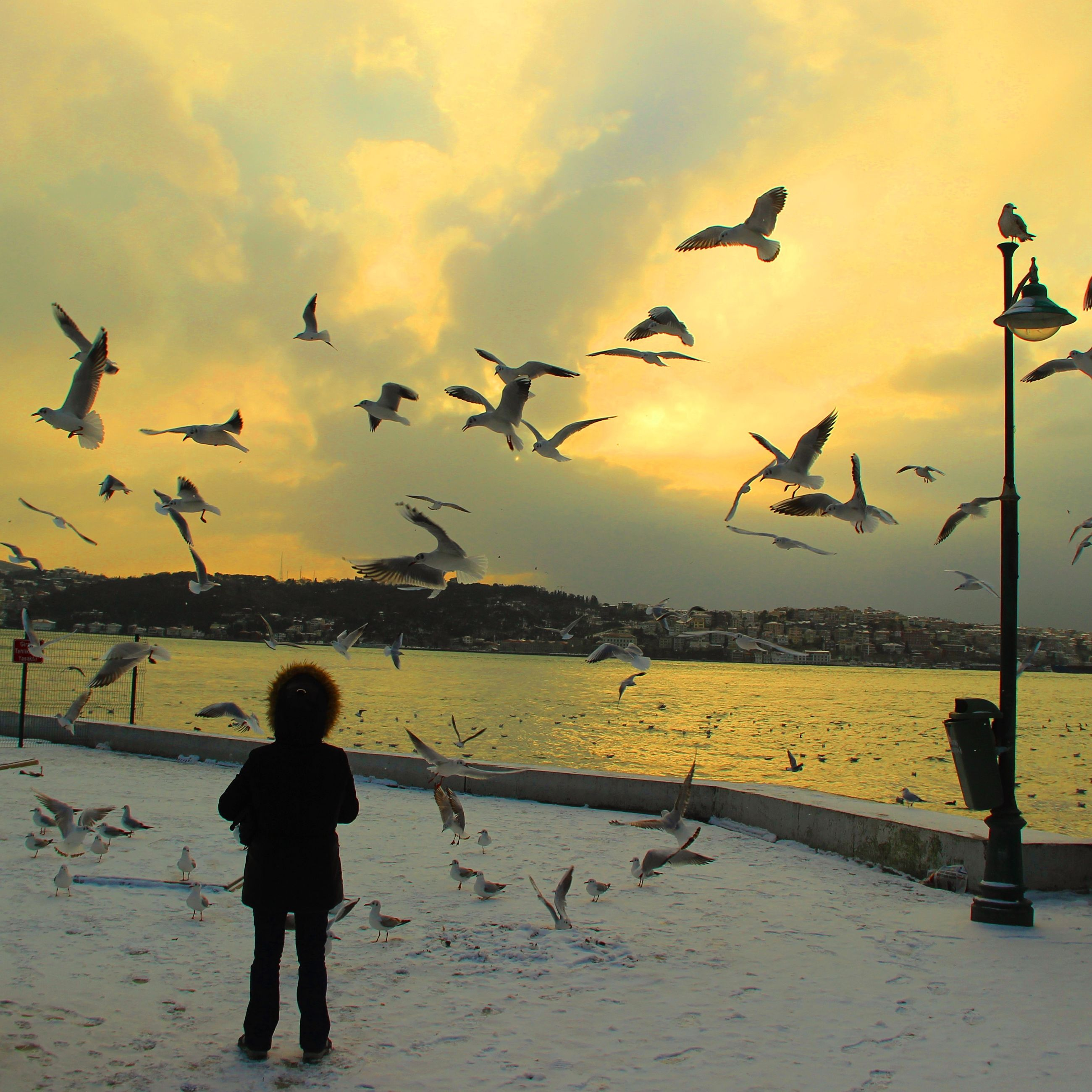 bird, water, animal themes, flying, animals in the wild, sky, wildlife, flock of birds, sunset, sea, cloud - sky, silhouette, pier, seagull, full length, nature, lifestyles, horizon over water