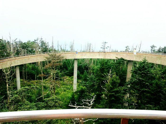 Clingmans Dome Tennessee Mountains