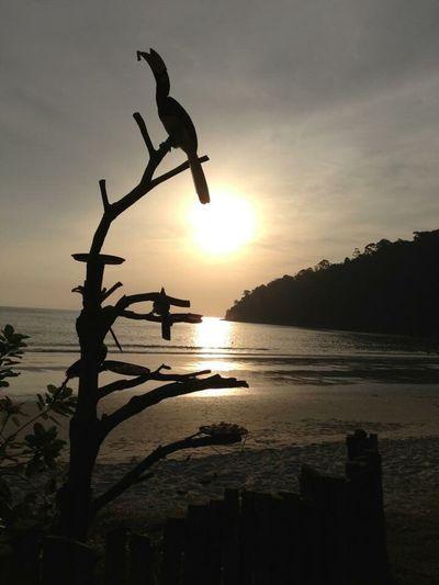 Sunset Malaysia Malaysia Truly Asia Hornbill Pangkor Beach Enjoying Life Relaxing