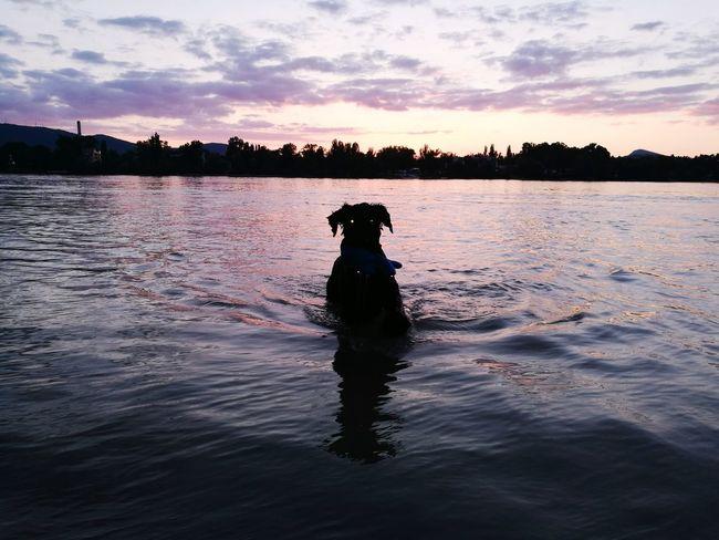 Dog Sunset Water Pets Swimming Summer First Eyeem Photo Pet Portraits