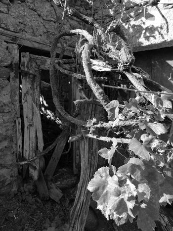 Derelict HuaweiP9 Monochrome Monochrome Photograhy Nature Oo Ruins SPAIN