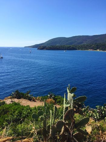 Nature Sea Mountain Beauty In Nature Scenics Tranquil Scene Tranquility Outdoors Blue Water Clear Sky Day No People High Angle View Landscape Growth Beach Plant Sky Isola D'Elba  Porto Azzurro Italy Kakteen