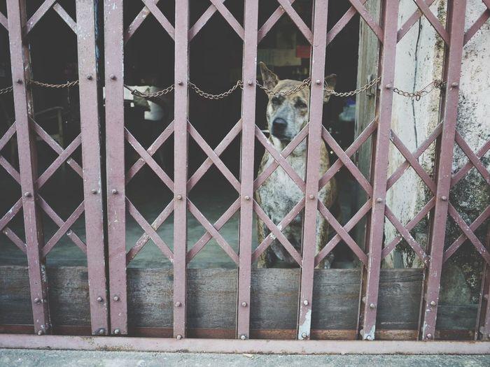 Waiting Dog Lonley Lonely Lonliness Case Thailand Thailand_allshots