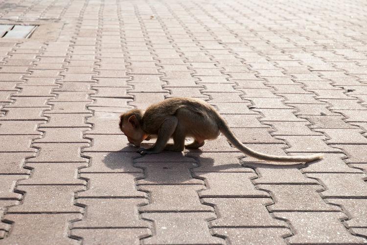 Squirrel sitting on stone wall