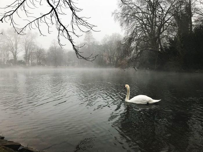 Swan swimming on lake against sky