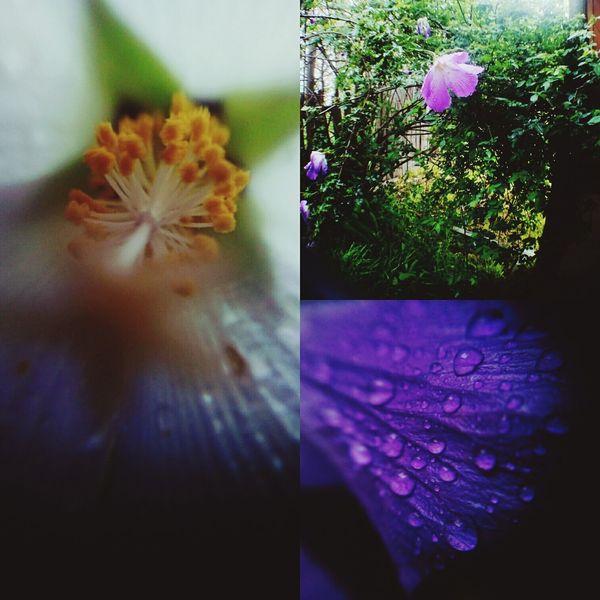 Maximum Closeness Purple Flower Rain