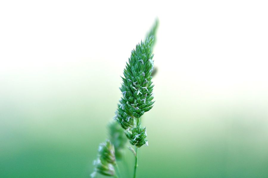 Botanical Gardens Grass Nature Beauty In Nature Botanical Close-up Day Detail Forest Fragility Freshness Green Color Growth Light And Shadow Meadow Naturalphotography Nature No People Outdoors Plant Tranquility