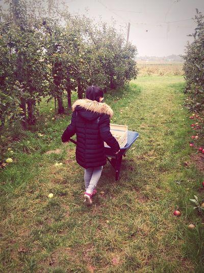A la cueillette... Enjoying Life Apple Hello World Working Trees Children Nature