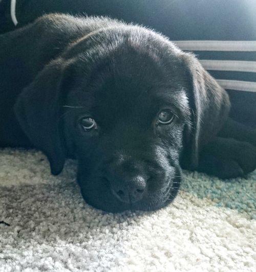 Dog Hello World Puppy PuppyLove Puppylife Tipsythedawg