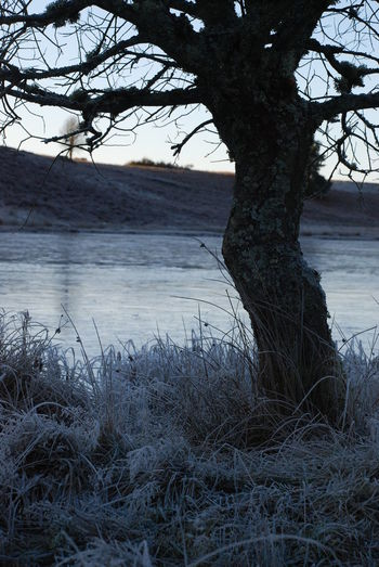 Frozen Pond Dec 2017 Perthshire, Scotland Tree Bare Tree Beauty In Nature Branch Day Frosted Grass Grass Growth Lake Landscape Nature No People Outdoors Scenics Sky Sun Setting Over The Water Tranquil Scene Tranquility Tree Tree Trunk Water Winter