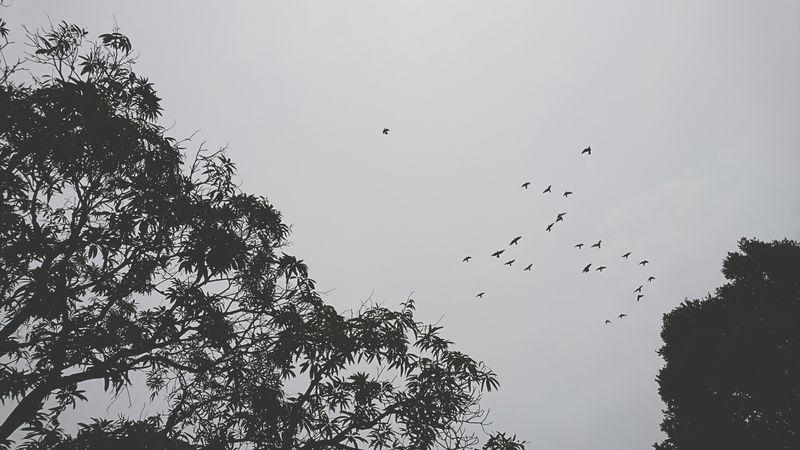 Sony Xperia Xz Takenwithxperia Shotbyxperia Itsme_itsXperia Mobilephotography Outdoor Outdoors Birds Fly Flying Sky Tree