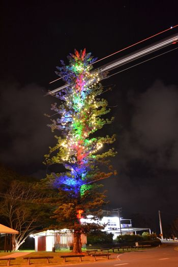 Night Celebration Sky Multi Colored Cloud - Sky Illuminated Architecture Outdoors Plant Tree GoldCoast Australia Transportation Plane Aeroplane Lights Building Exterior Built Structure Low Angle View No People Tree Nature