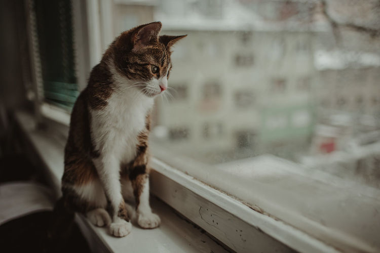 Cat looking away while sitting on window at home