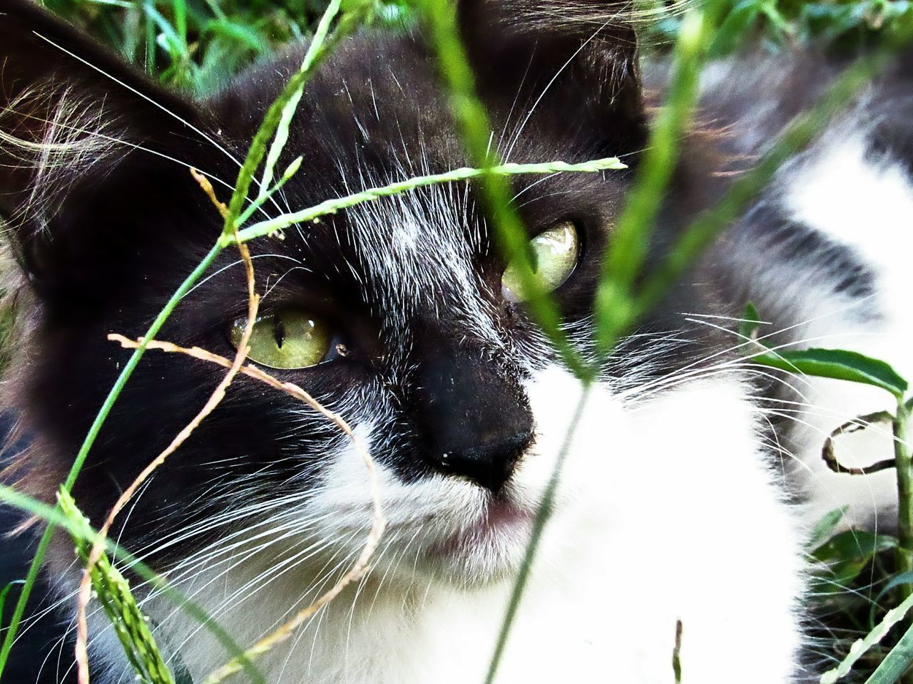animal themes, mammal, animal, cat, pets, feline, one animal, domestic animals, domestic, domestic cat, vertebrate, animal body part, whisker, no people, close-up, day, looking at camera, portrait, focus on foreground, plant, animal head, animal eye, yellow eyes, snout