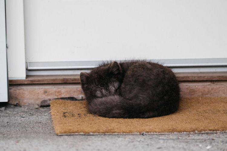 Cat sleeping on doormat at doorway