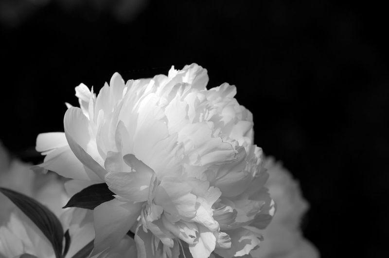 Close-up Elégance Fragility Springtime