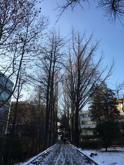 South Korea Seoul Konkuk Univ Road Blue Sky Dead Snow Winter Bare Tree Cold Temperature Tree Nature Beauty In Nature Tranquility Scenics