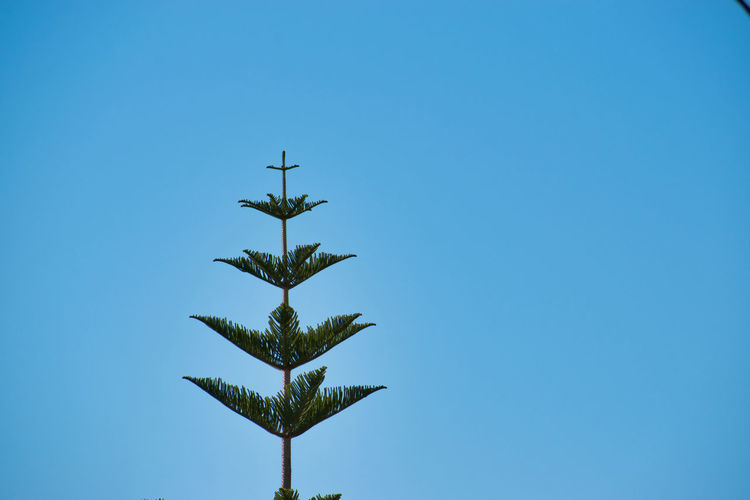 Tree against blue sky Blue Sky Clear Sky Low Angle View Nature Copy Space No People Growth Plant Outdoors Leaf Plant Part Tree Green Color Tropical Climate Directly Below Beauty In Nature Day Tree Palm Tree EyeEm Selects EyeEm Best Shots EyeEm Gallery