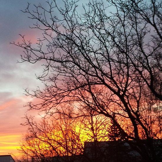 Guten Morgen. Winter2014 Februar Oberbayern Attel sunrise nofilter hiergradso goodmorning gutenmorgen