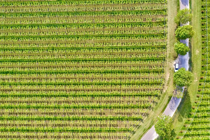Italy, Verona: Valpolicella wineyards Drone  Green Color Agriculture Plant Land Nature No People Growth Field Wineyard Valpolicella Drone Photography From Above  High Angle View Looking Down Pattern Textured  Full Frame Crop  Backgrounds Parallel Lines Lines Landscape Springtime Day Daylight Daytime Geometry Horizontal Italy Verona Repetition Nature Outdoors Nobody Viniculture Environment Shades Of Green  In A Row Side By Side Order Abundance Rural Scene Aerial View Road Country Road Curve Scenics - Nature Beauty In Nature Transportation