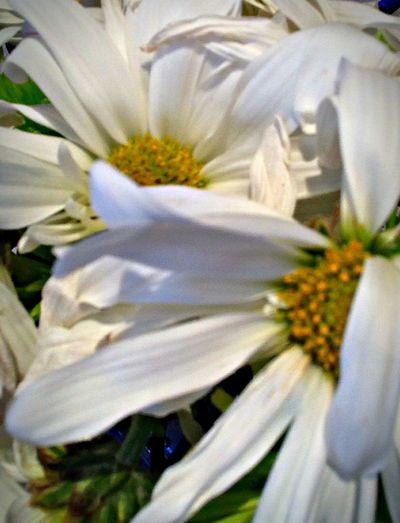 White flower Enjoying The Sights Taking Photos Having Fun :)