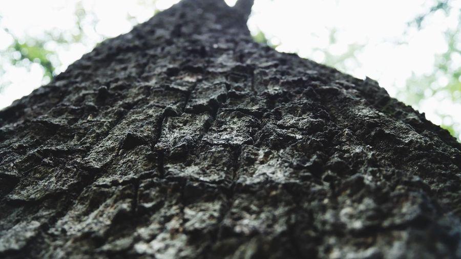 Tree Trunk Tree