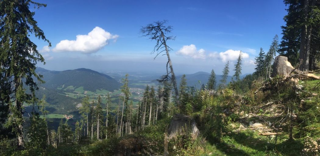 Panoramic view from the mountain Unternberg in the Bavarian alps Nature Mountain Tree Tranquility Beauty In Nature Tranquil Scene Sky Growth Scenics Landscape Day Cloud - Sky No People Plant Mountain Range Outdoors Germany🇩🇪 Bavaria Bavarian Bavarian Alps Unternberg Bavarian Landscape Panoramic Tree